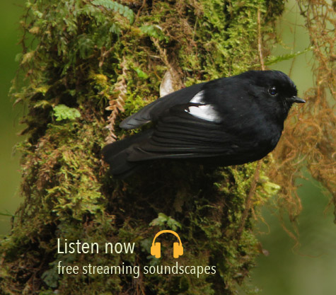 Listening Earth - nature sounds of nature, birdsong, environment