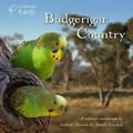 Budgerigar Country album
