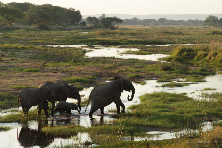 Safari - An African Wildlife Encounter - the sounds of Africa