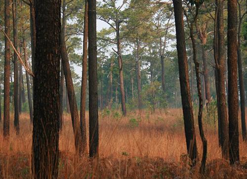 Thung Salaeng Luang National Park, Thailand