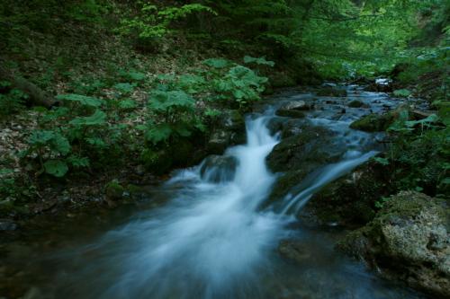 Woodland stream near Bolu in Turkey