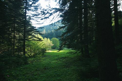Glade in forest near Lake Bolu