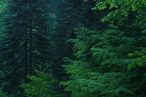 Mixed deciduous and coniferous forest in Turkey