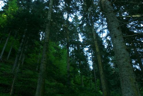 Forest near Lake Bolu, Turkey