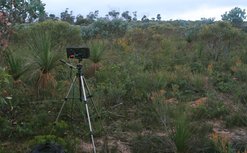 SASS microphone head in the Stirling Ranges, western Australia