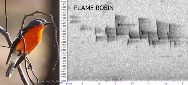 Flame Robin sonogram