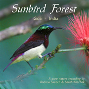 Sunbird Forest album cover